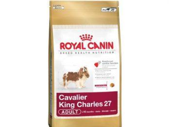 Cavalier King Charles 1.5 Kg