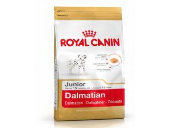 Dalmatian junior 25