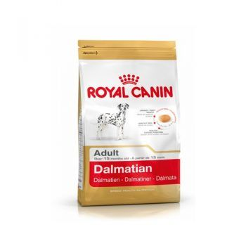 Dalmatian Adulto 22