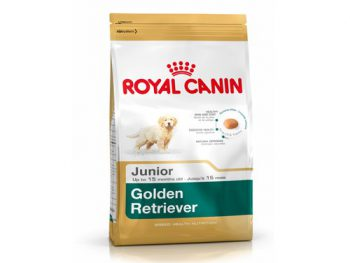 Golden Retriever Junior 29