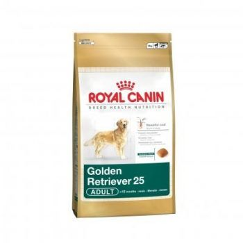 Golden Retriever 25
